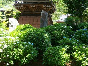 日本寺2016060404